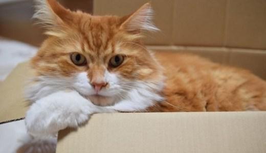 猫の尿検査でわかることは?項目や数値の見方や正常値など!