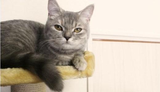 猫の横隔膜ヘルニアの治療や手術費用、術後について!