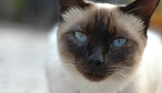 猫の老化は何歳から?症状,兆候を外見や行動からチェック!