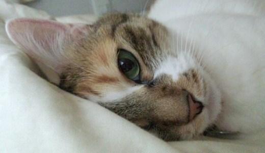 猫の性格が変わるのは病気の可能性も!考えられる原因とは?