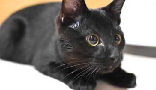 猫のてんかんと気圧や気温との関連性!発作を誘発するのは?