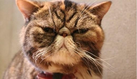 猫に生肉は寄生虫や食中毒の危険も?量や与え方,注意点など!