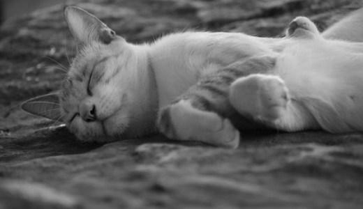 腎不全の猫で見られる体重減少or増加の原因や体の状態とは?