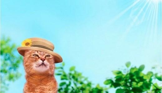 猫には痩せる時期(季節)がある?その原因や体の状態とは?