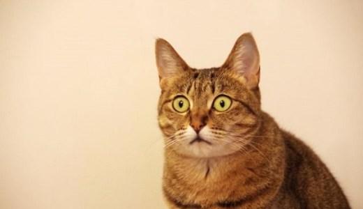 猫のうつ病って?原因や症状と治療法について!