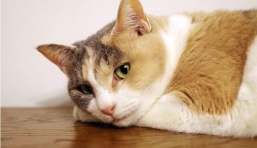 猫の腎臓が腫れる原因は?触診や超音波検査で分かる異常など!