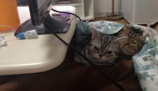 同居猫の相性や仲間意識、共生についての見解/わが家の女王猫