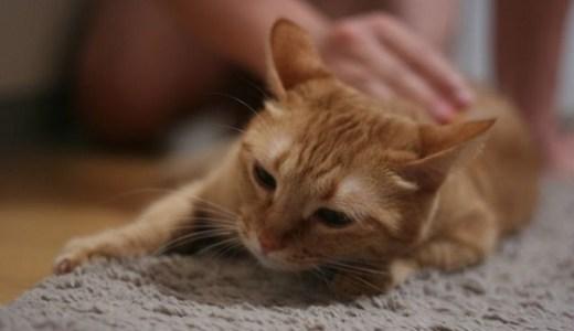 猫の腎不全!乏尿、無尿期の状態や治療法、予後や余命など!
