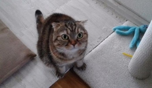 初ペットシッター体験したわが家の女王猫たちの反応は?