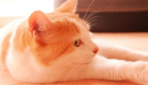 猫の腎不全による貧血の改善に造血剤サプリの種類や効果など!
