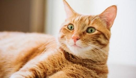 猫の胸水の治療法!利尿剤など薬や抜く場合のリスクについて!