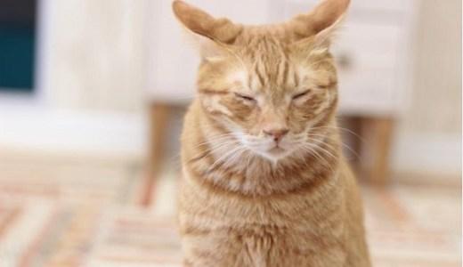 高齢猫(老齢)の匂いの異常や変化の原因と対処法について!