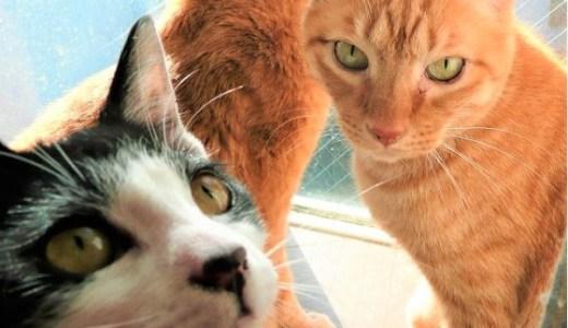 多頭飼育の猫同士の相性!うまくいってるorいってない徴候とは?