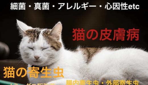 猫の皮膚病と寄生虫まとめ!アレルギーや心因性など原因別対処法!