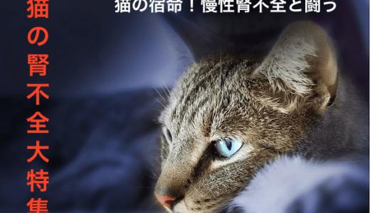 猫の腎不全で見られる症状と治療法や対処法などまとめ!