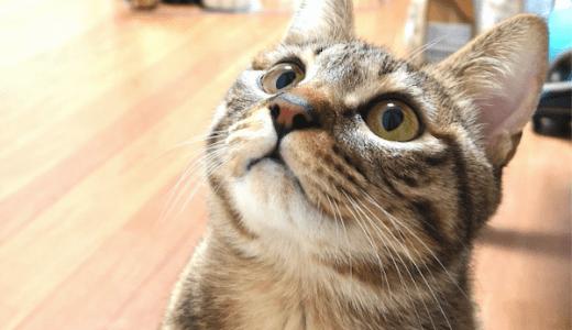 猫の目が見えてないかも?視力低下のサインや原因について!