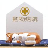 青森県で夜間の救急対応が可能な動物病院!ペットの緊急時に!
