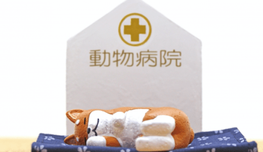 【越谷市】ペットの救急時、夜間診療が可能な動物病院