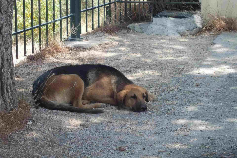 zmęczony pies leży w cieniu po bieganiu