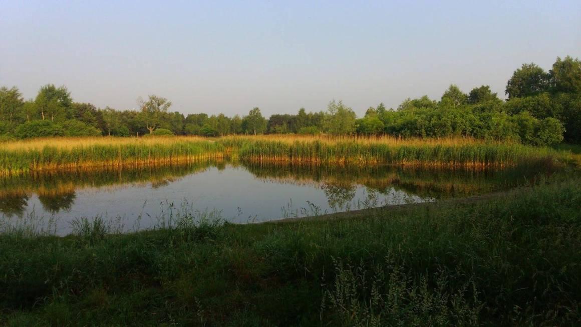 urlop, staw bielice, zielone uroczysko lublinek, woda, drzewa, cisza