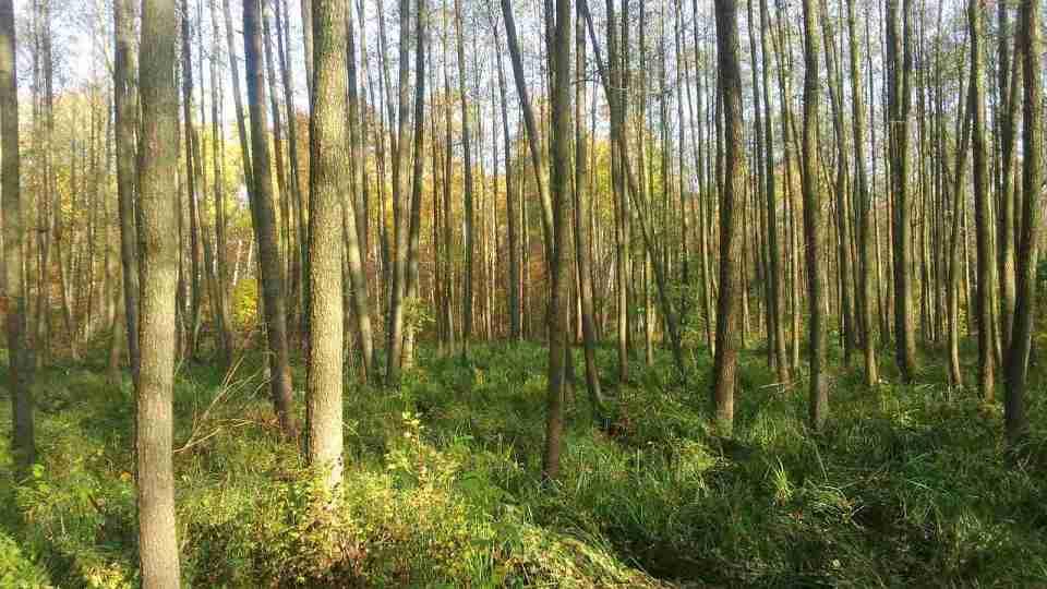 proste drzewa zielona ściółka, wysokie trawy