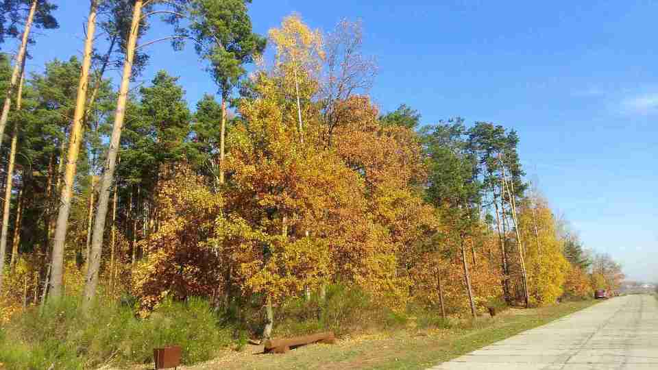 bieganie w lesie uroczysko lublinek jesienią, betonowa droga wzdłuż lasu