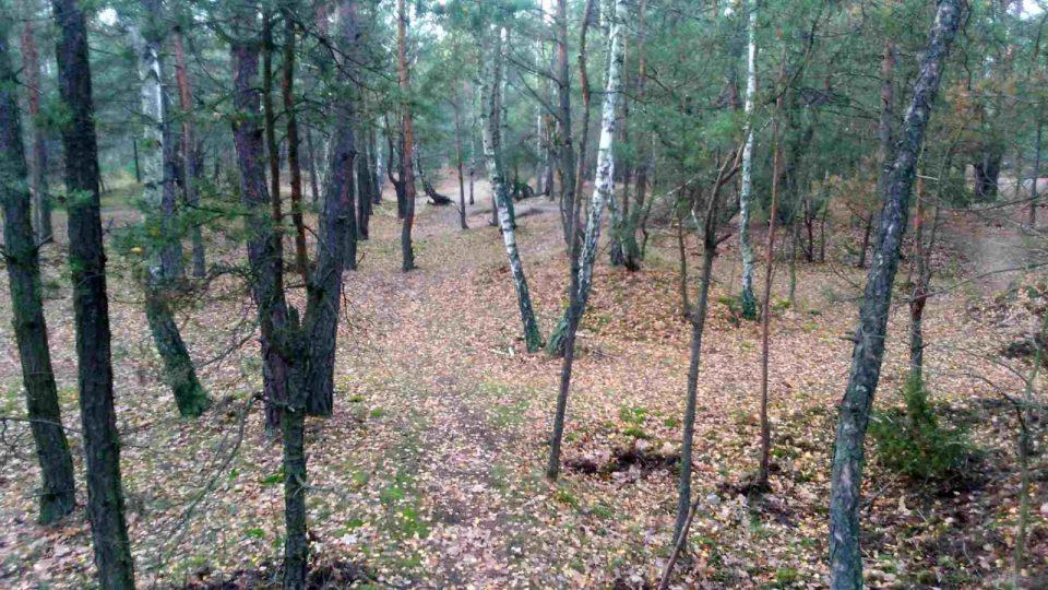 gdzie robić podbiegi, krosowy teren do biegania w lesie