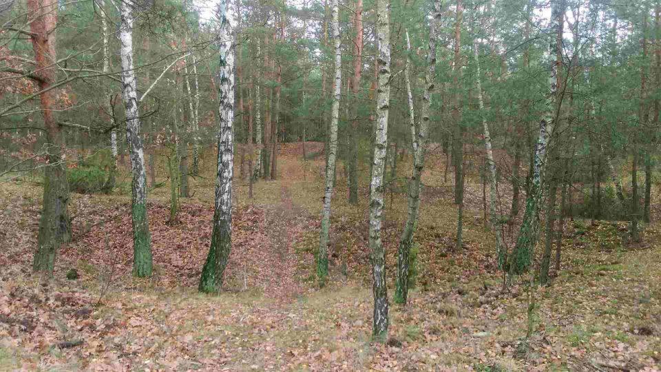 gdzie robić podbiegi, teren krosowy do biegania w lesie