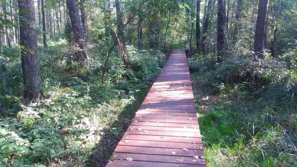 Uroczysko Lublinek jesienią, kolory jesieni na drzewach, leśne ścieżki, drewniany podest