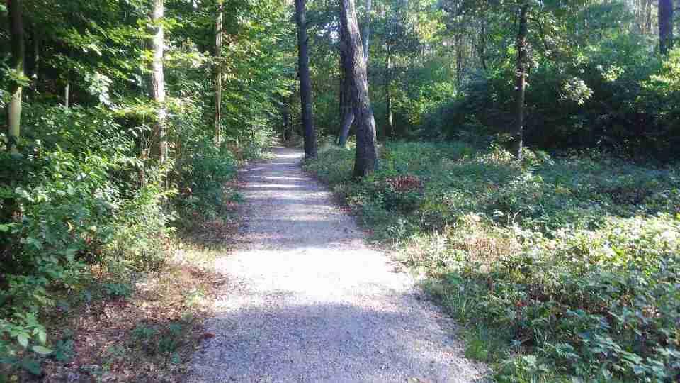 Uroczysko Lublinek jesienią, kolory jesieni na drzewach, leśne ścieżki