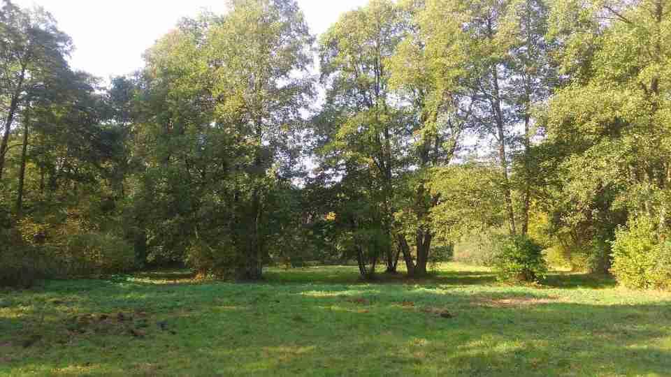 Uroczysko Lublinek jesienią, kolory jesieni na drzewach, leśne ścieżki, polana