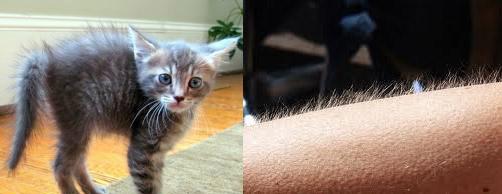 cat goosebumps