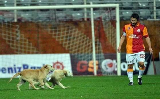 Galatasaray vs Vfr Aalen puppies 560x347