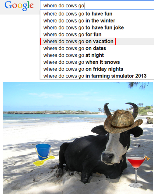 where do cows go on vacation