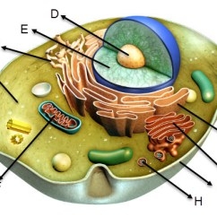 Animal Cell Diagram Labeled And Functions Cdi Wiring Review The Of Given Below Answer Download Jpg