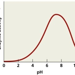 Plot Diagram Activity Home Power Saver Circuit According To The Graph How Is Ph Affecting Enzyme A Not Affected By Changes Brainly Com