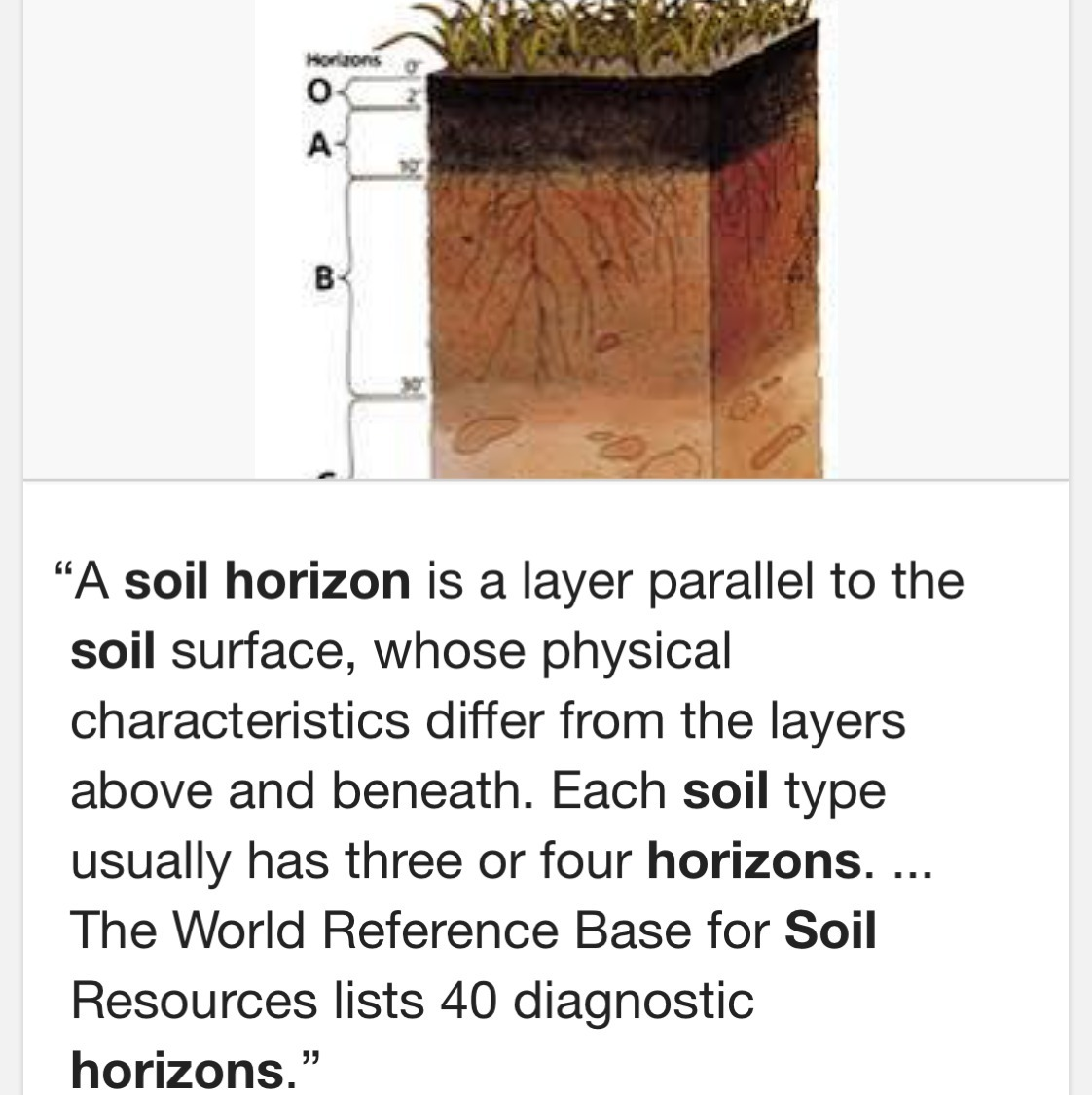 What Are The Descriptions Of Soil Horizons
