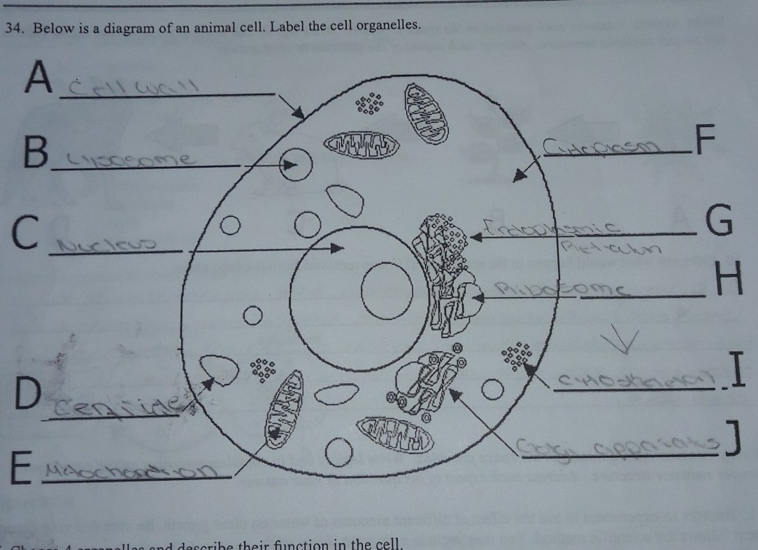 35 Cell Diagram To Label