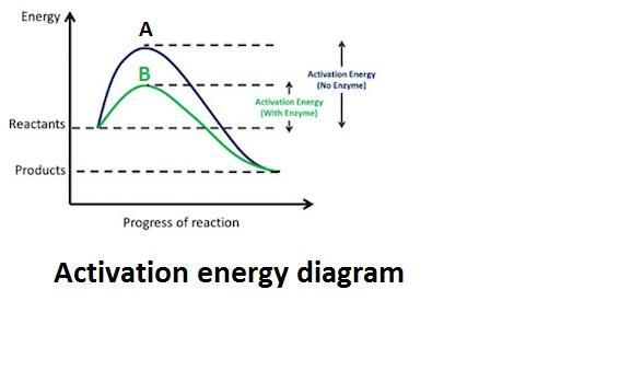 How does the activation energy differ between reactions A