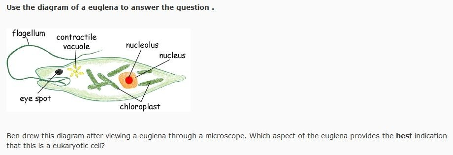 euglena cell diagram with labels gorilla skeleton ben drew this after viewing a through microscope download png