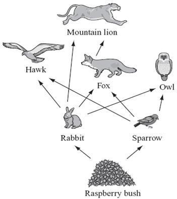 If the owl is removed from the food web, what will most