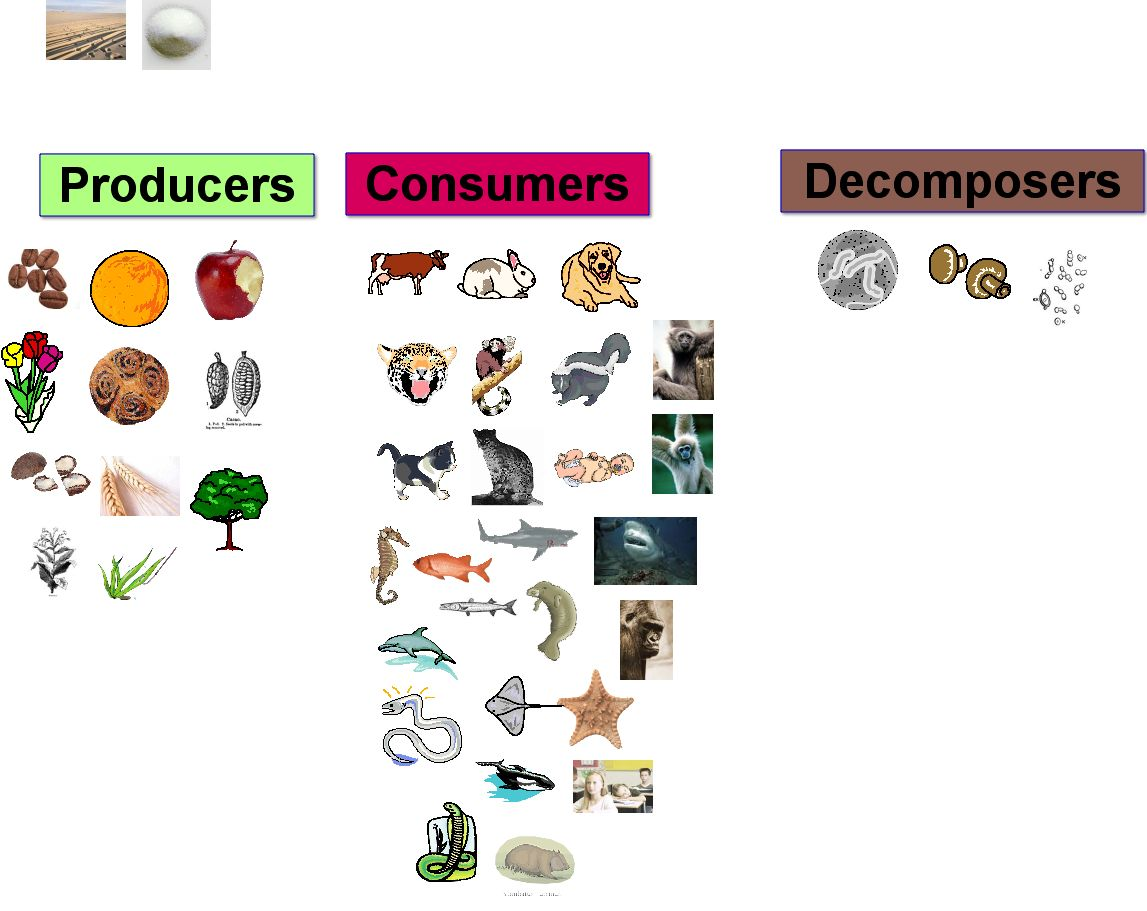 What Are Decomposers