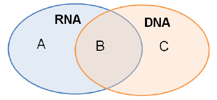 venn diagram comparing dna and rna basic wiring diagrams a can be used to compare contrast nucleic acids which characteristic would correctly found in b contain ribose consist of two strands