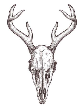 Deer Skull Vector : skull, vector, Sketch, Skull,, Illustration, Royalty, Cliparts,, Vectors,, Stock, Illustration., Image, 109047971.