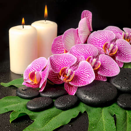 https://i0.wp.com/us.123rf.com/450wm/alisali/alisali1406/alisali140600048/28867874-blooming-twig-of-stripped-violet-orchid-phalaenopsis--zen-stones-with-drop-and-candles-on-the-big-gr.jpg