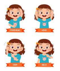 Happy Cute Kid Girl Study Body Part Anatomy Royalty Free Cliparts Vectors And Stock Illustration Image 147908738