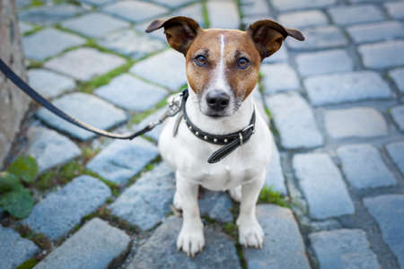 homeless dog lonely with leash Stock Photo - 16062385