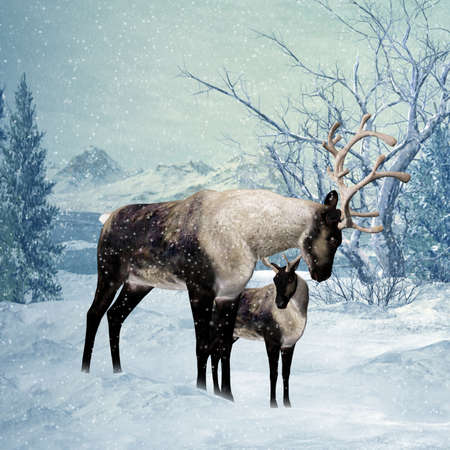 Reindeer and Fawn Winter Greeting Card  Stock Photo - 17665458