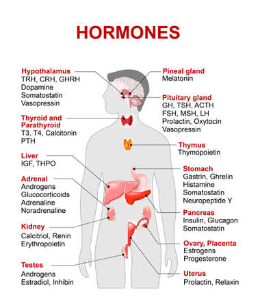 endocrine system diagram ceiling fan motor capacitor wiring stock photos and images 123rf gland hormones human anatomy silhouette with highlighted red