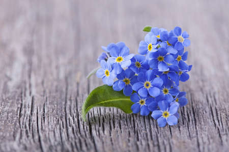 Forgetmenot flowers in heart shape on a wooden background Stock Photo - 19082127